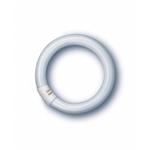 Изображение L 22/640 C G10g 216mm 4000K OSRAM кольцо